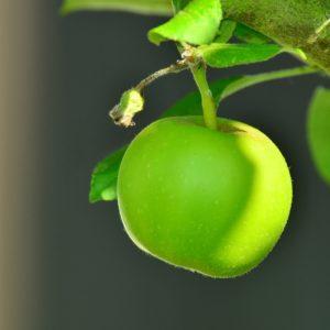 Vidéo « Oh la belle pomme ! »