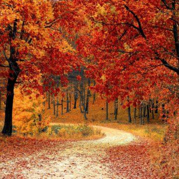 Cercles des Naturalistes de Belgique section Haute Sambre : Activités d'automne 2020
