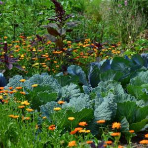 Comment jardiner  au naturel ?