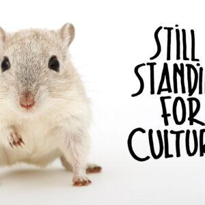 Retour sur le Billet d'humeur de et par l'écrivain Pierre-Jean Foulon pour l'action «Still Standing For Culture»