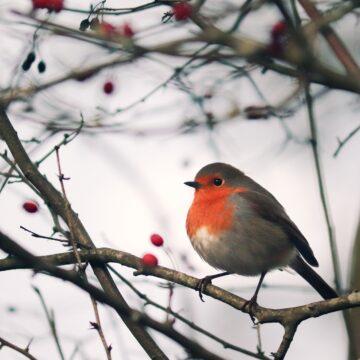 Que faire au jardin et dans la serre à la morne saison ?